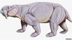 131128212014_dynodontosaurus_512x288_wikipedia