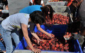 vaisiai-skirti-rusijos-rinkai-65590296