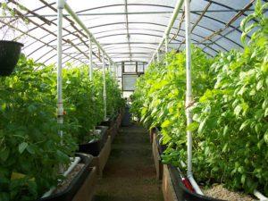 Бизнес идея. Изготовление теплиц, парников, оранжерей и зимних садов